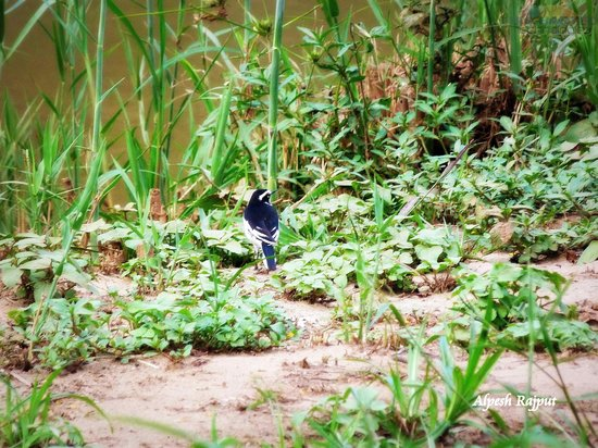 Wellvale Private River Resort : Just some of the birds