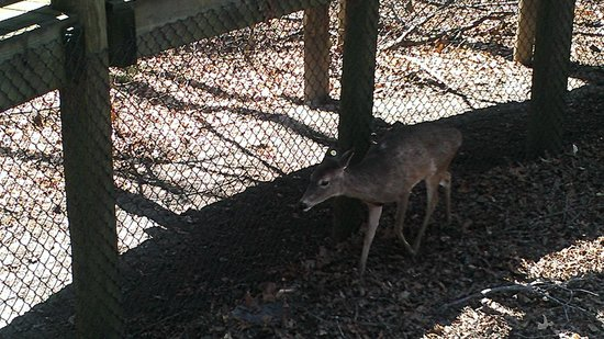 Newport News, VA: Deer