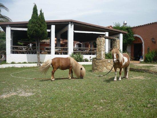 Mas Lledoner: parc infantil con ponis
