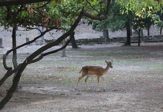 Chateau de Rochegude : The deer