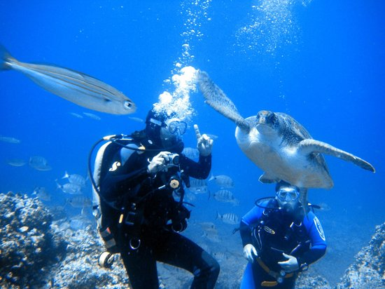 Tenerife scuba diving los cristianos spain top tips for Dive centres