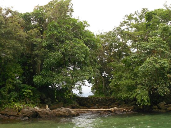 Tropical Forest: Mata Atlântica