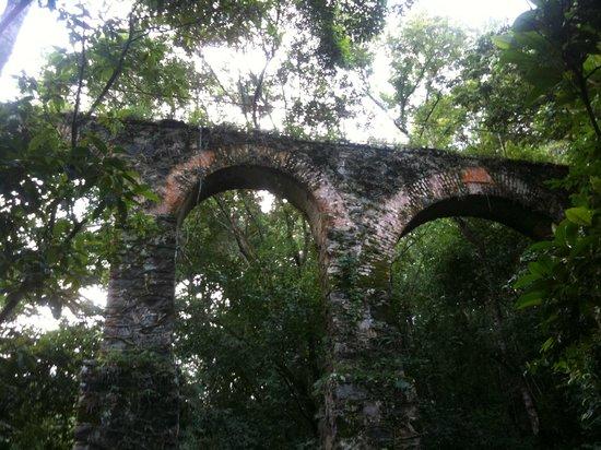 Tropical Forest: Mata Atlântica - Aqueduto de Ilha Grande