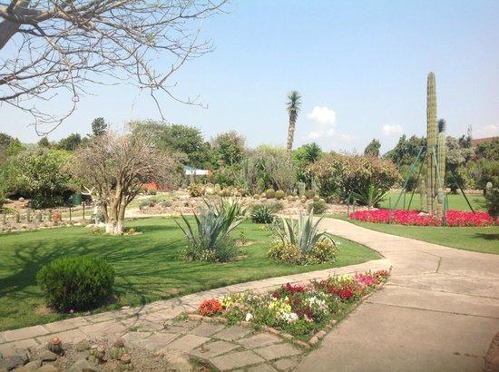 Sarkaria Cactus Garden: Cactus Garden