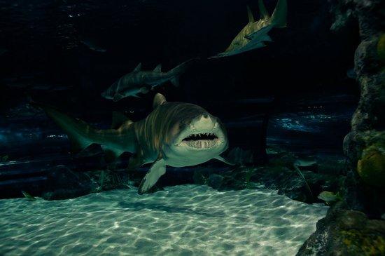 Tripadvisor Ripley S Aquarium Myrtle Beach