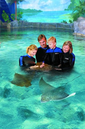 Ripley's Aquarium (Myrtle Beach) - 2018 All You Need to ...
