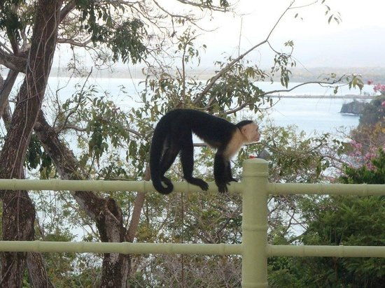 Issimo Suites Boutique Hotel and Spa: Royal suite balcony. Capuchins were always hanging around...