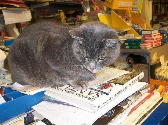 Libreria Acqua Alta: Il gatto Pirro