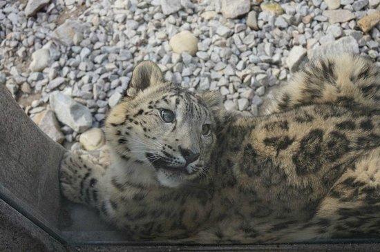 Zoo Karlsruhe: Wild cat