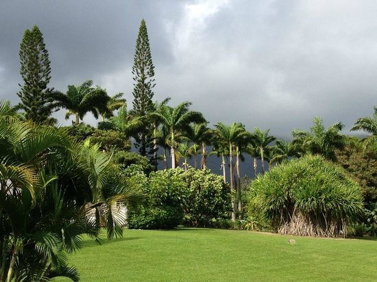 Ottley's Plantation Inn: Tropical forest on grounds