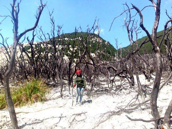 Mount Papandayan : get the picture at taman mati