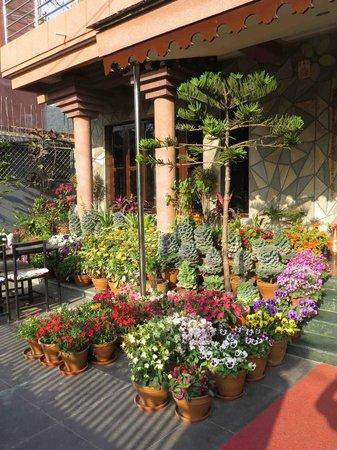 Hotel View Point : jardin en entrée