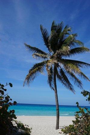 Casa Kenia and Niorlan: Beautiful beach area