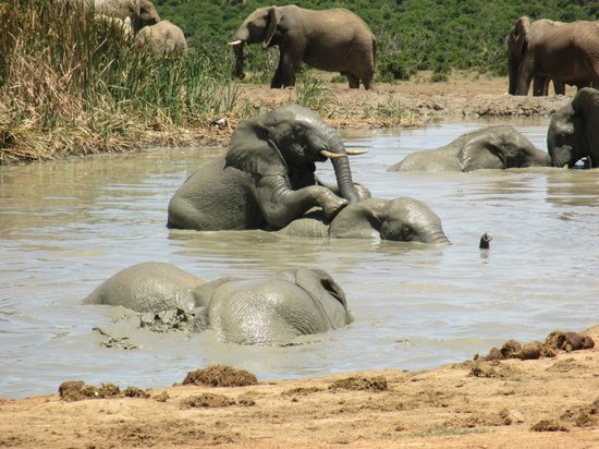 Addo Rest Camp : At the water hole