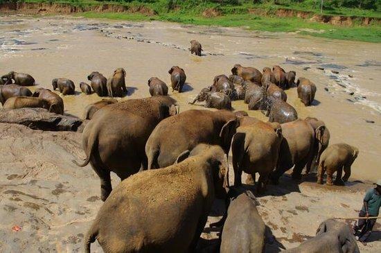 Hotel Elephant Bay: слоники