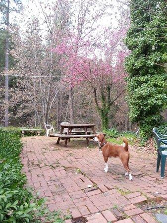 Sierrascape: Outside picnic area