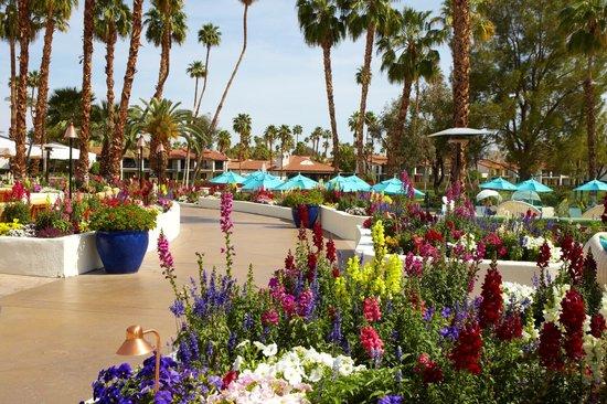 Omni Rancho Las Palmas Resort & Spa : Plaza Flowers