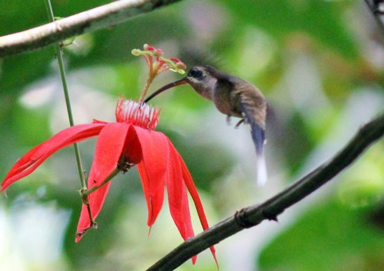 Martina's Place Hostel: Birdwatching tour $35