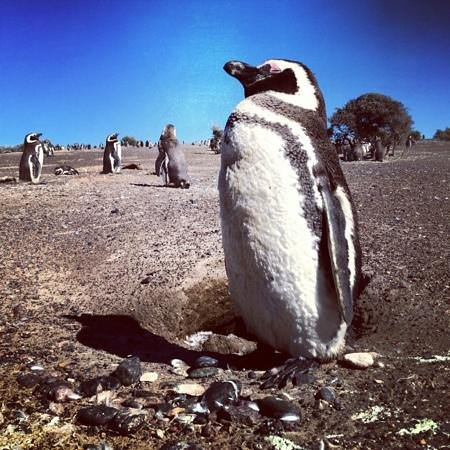 Image result for national penguin day 2016