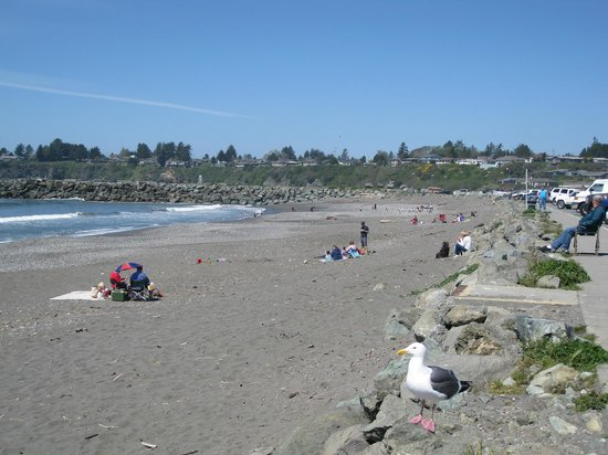 The beach looking north - Beachfront RV Park