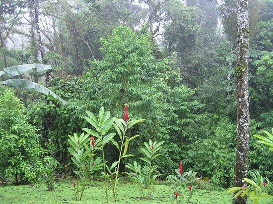 Hotel Lomas del Volcan: Our backyard