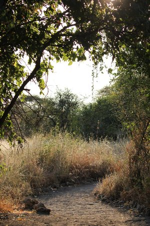 Manyara Ranch Conservancy: Pretty paths wound through the property.
