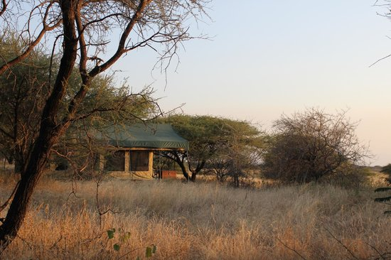 Manyara Ranch Conservancy : This is the view of our daughters' tent from our tent.