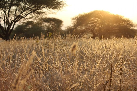 Manyara Ranch Conservancy : Beautiful property.