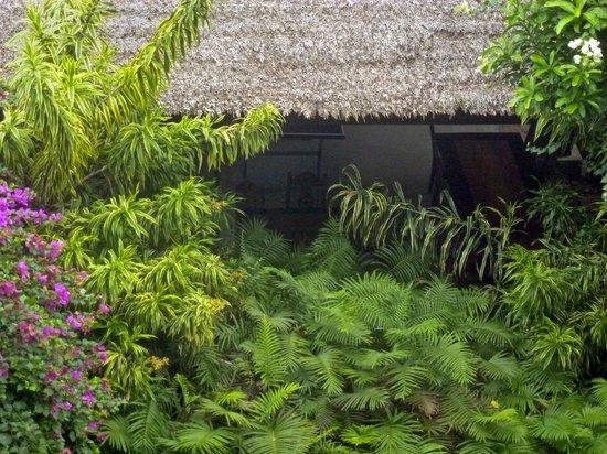 Amarela Resort: Amarela foliage
