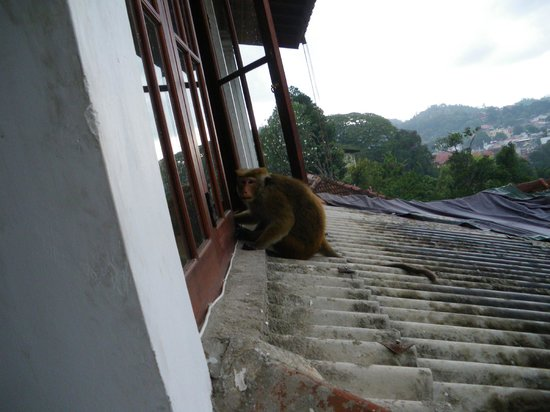 Nathashiya Holiday Inn: Visitor!