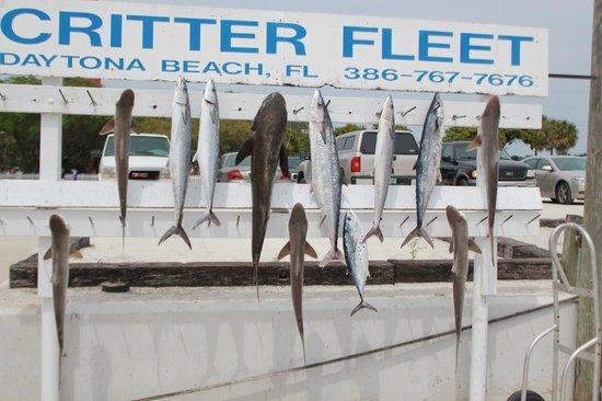 Critter Fleet