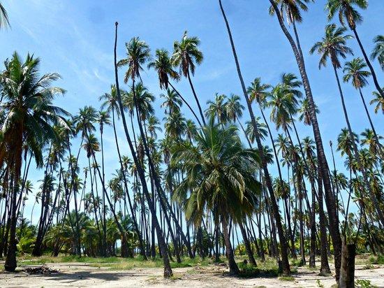 Kapuaiwa Coconut Grove / Kiowea Park: Coconut Grove