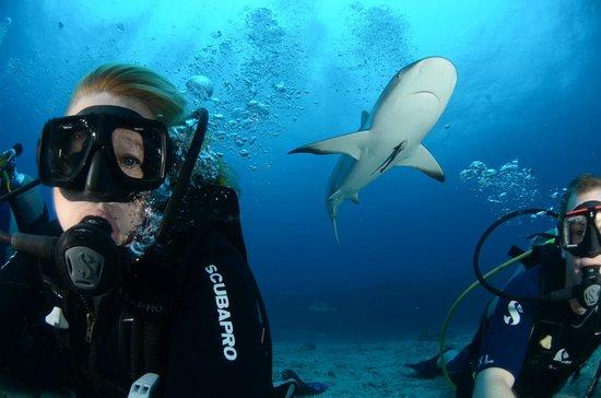 Simpson Bay, St Marteen/St. Martin: Shark and me