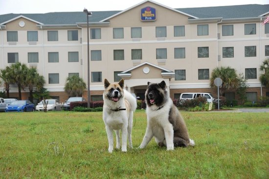 Best Western Plus Valdosta Hotel & Suites: Happy furguests :-))