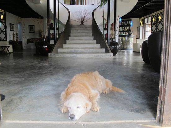 ViewPoint Lodge & Fine Cuisines: Pooch Taking In The Cool Concrete Floor At ViewPoint
