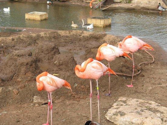 Abilene Zoo: Flamingos and Ducks