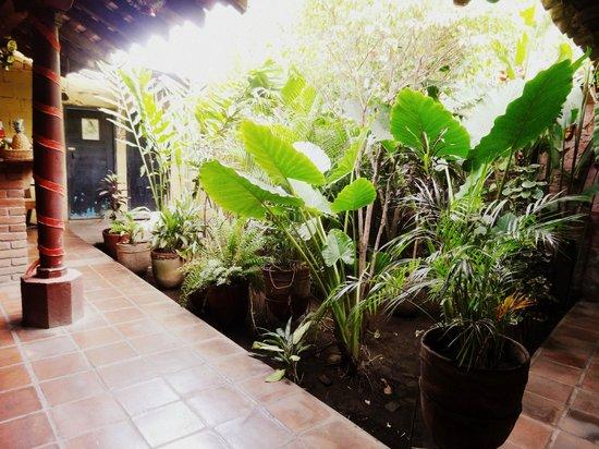 CocinArte: Typical courtyard style restaurant with a lovely garden