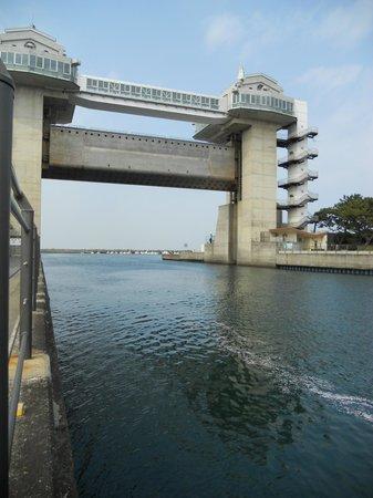 Numazu Flood Gate Observation Deck View-O: 水門の方に流れるさくらの花びら