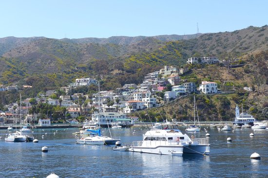 Catalina island express coupon code