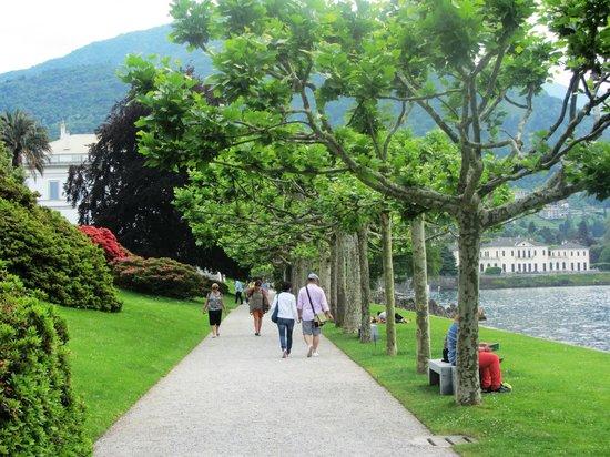 Azalea bush in flower picture of i giardini di villa melzi bellagio tripadvisor - Giardini di villa melzi ...