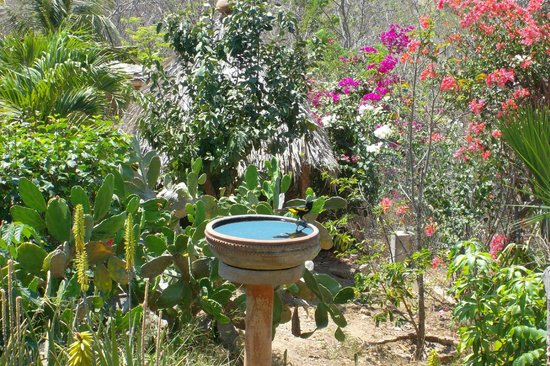 Villa Escondida: Jardines