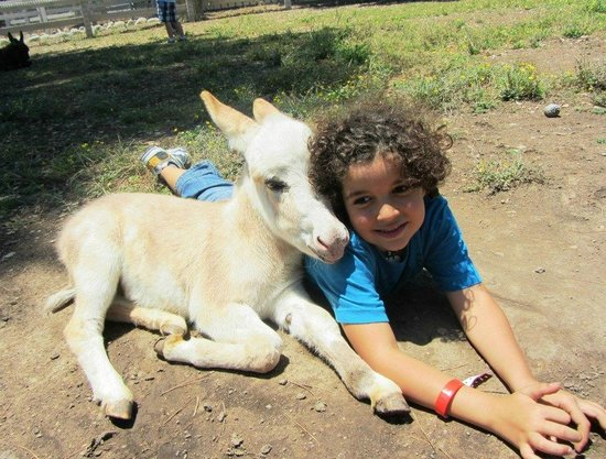 Solvang, Kalifornien: Emanuel with the baby donkey!