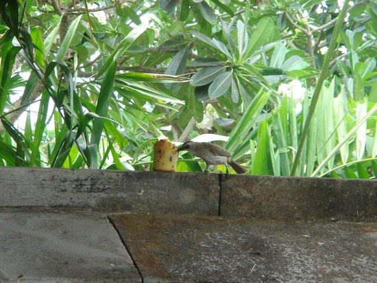 Four Seasons Resort Bali at Jimbaran Bay: 與自然小動物一起生活