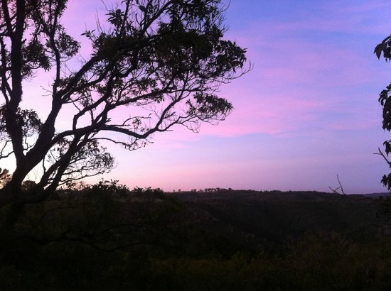 Teniqua Treetops: Good Morning in Teniqua Treetop Lodge