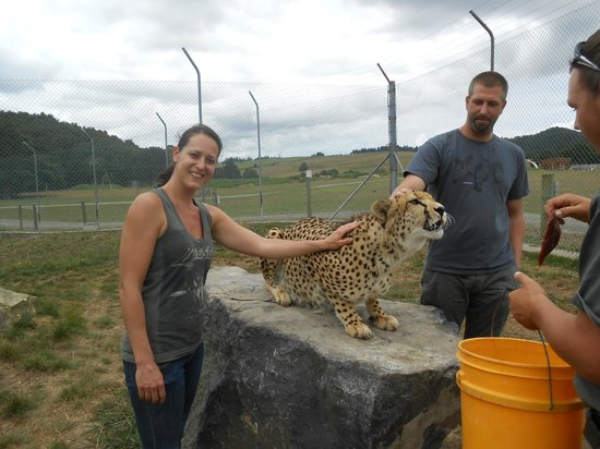 Whangarei, Nova Zelândia: Cheetah encounter