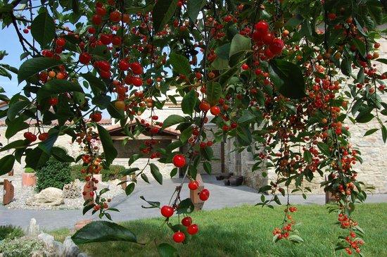 Agroturismo Arkaia-verano en el jardín