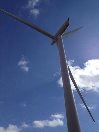Whitelee Wind Farm Visitor Centre: windfarm