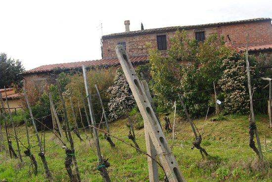 Tenuta Sant'Agnese : Casa