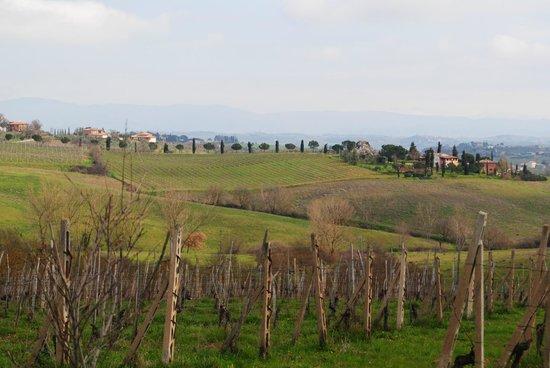 Tenuta Sant'Agnese : Viñedos del Agriturismo
