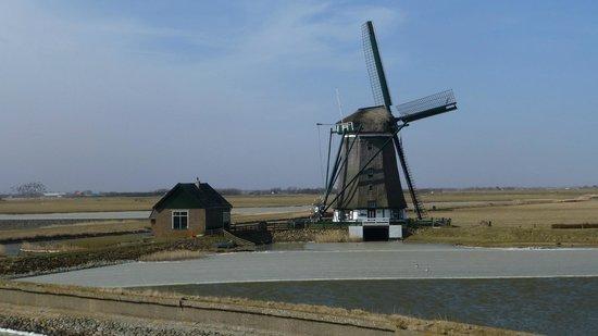 Hotel Greenside : Molen op Texel